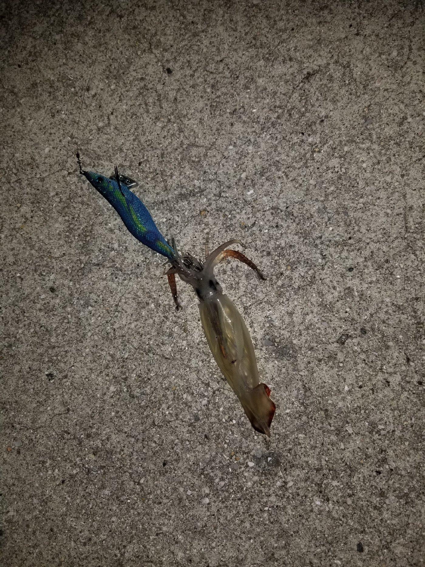 烏賊野郎さんの投稿画像,写っている魚は