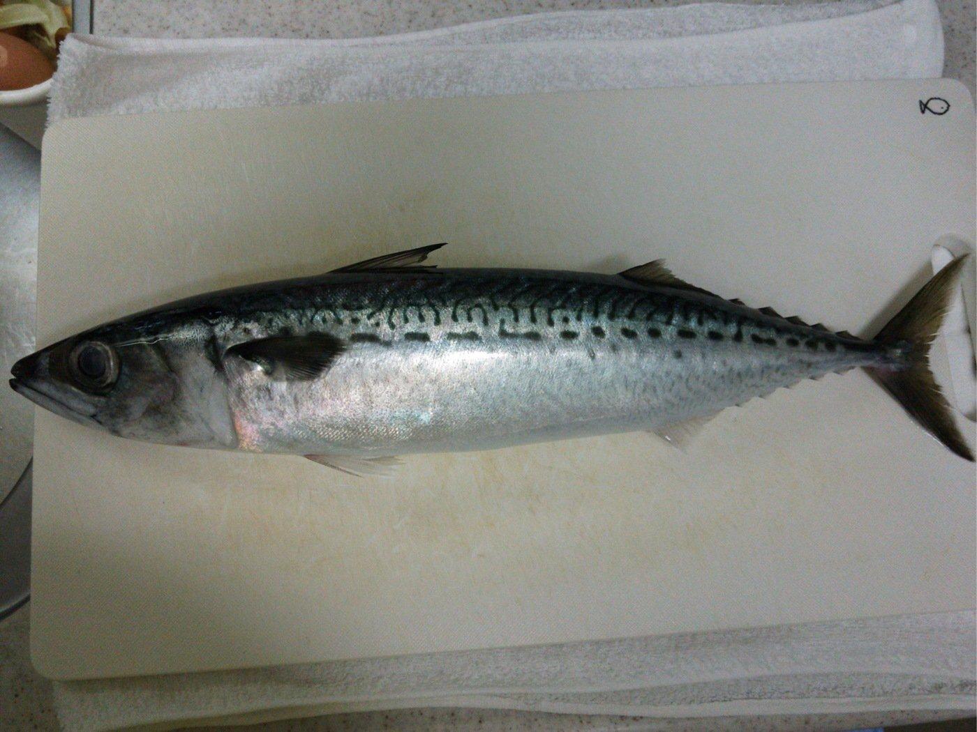 まるたさんの投稿画像,写っている魚はゴマサバ