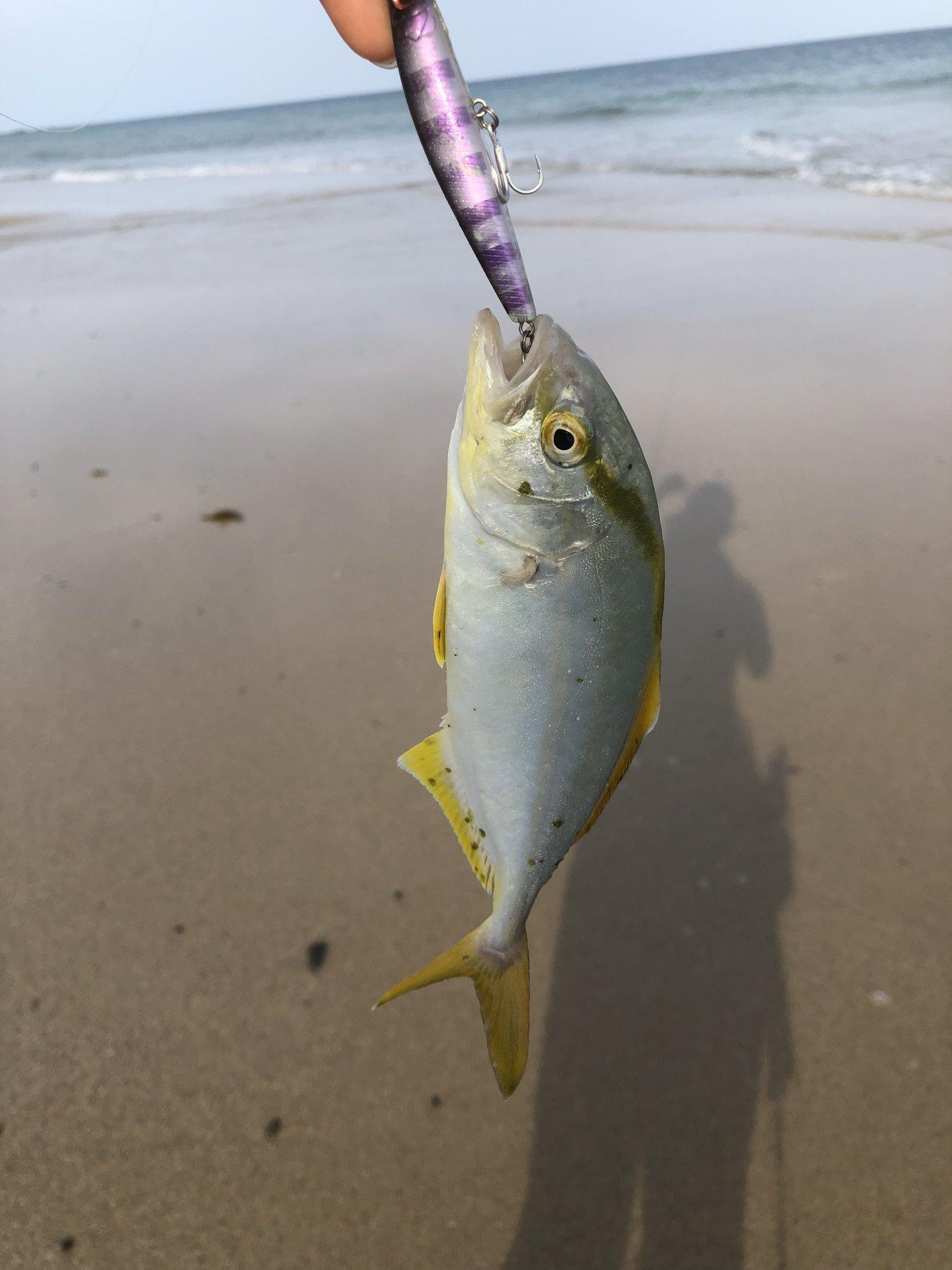 ヨウスケさんの投稿画像,写っている魚はカンパチ