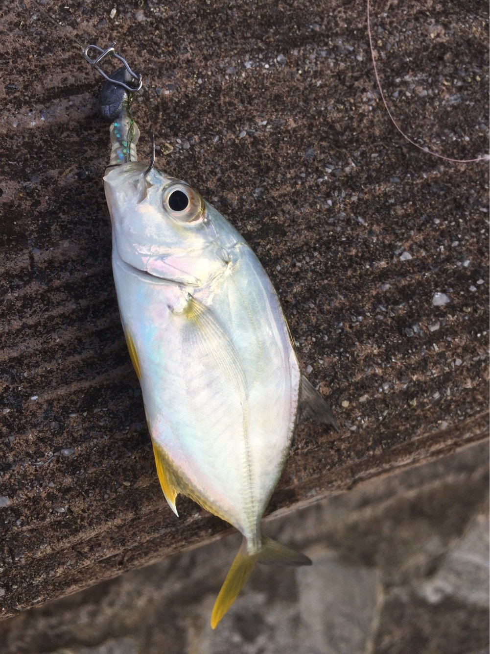 skaさんの投稿画像,写っている魚は