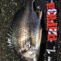 katsuzo304さんの東京都品川区での釣果写真