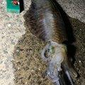 Yuuichi Irieさんの長崎県五島市での釣果写真