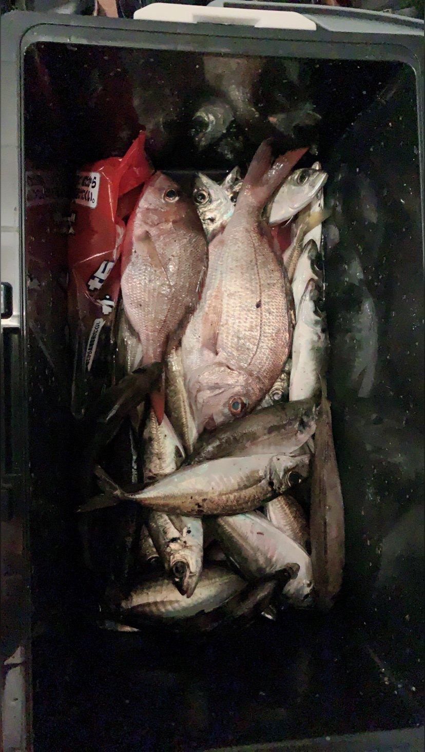 yumeさんの投稿画像,写っている魚はアジ,ヒメダイ