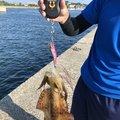たかさんの愛知県碧南市での釣果写真