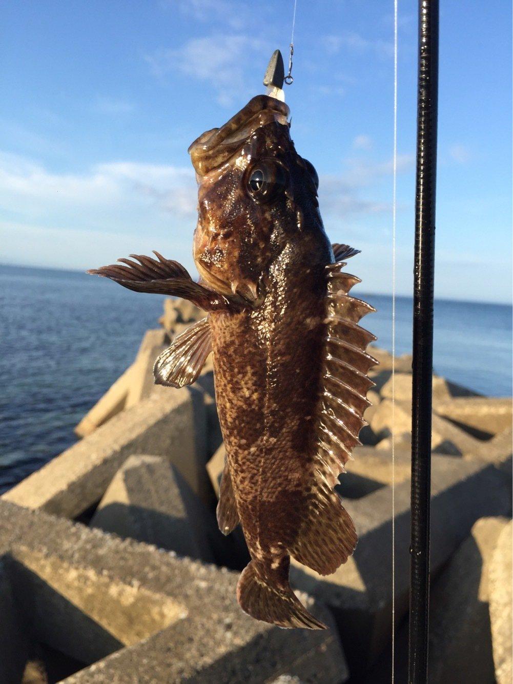 フネさんの投稿画像,写っている魚はクロメバル