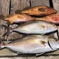 てつさんの長崎県西海市での釣果写真