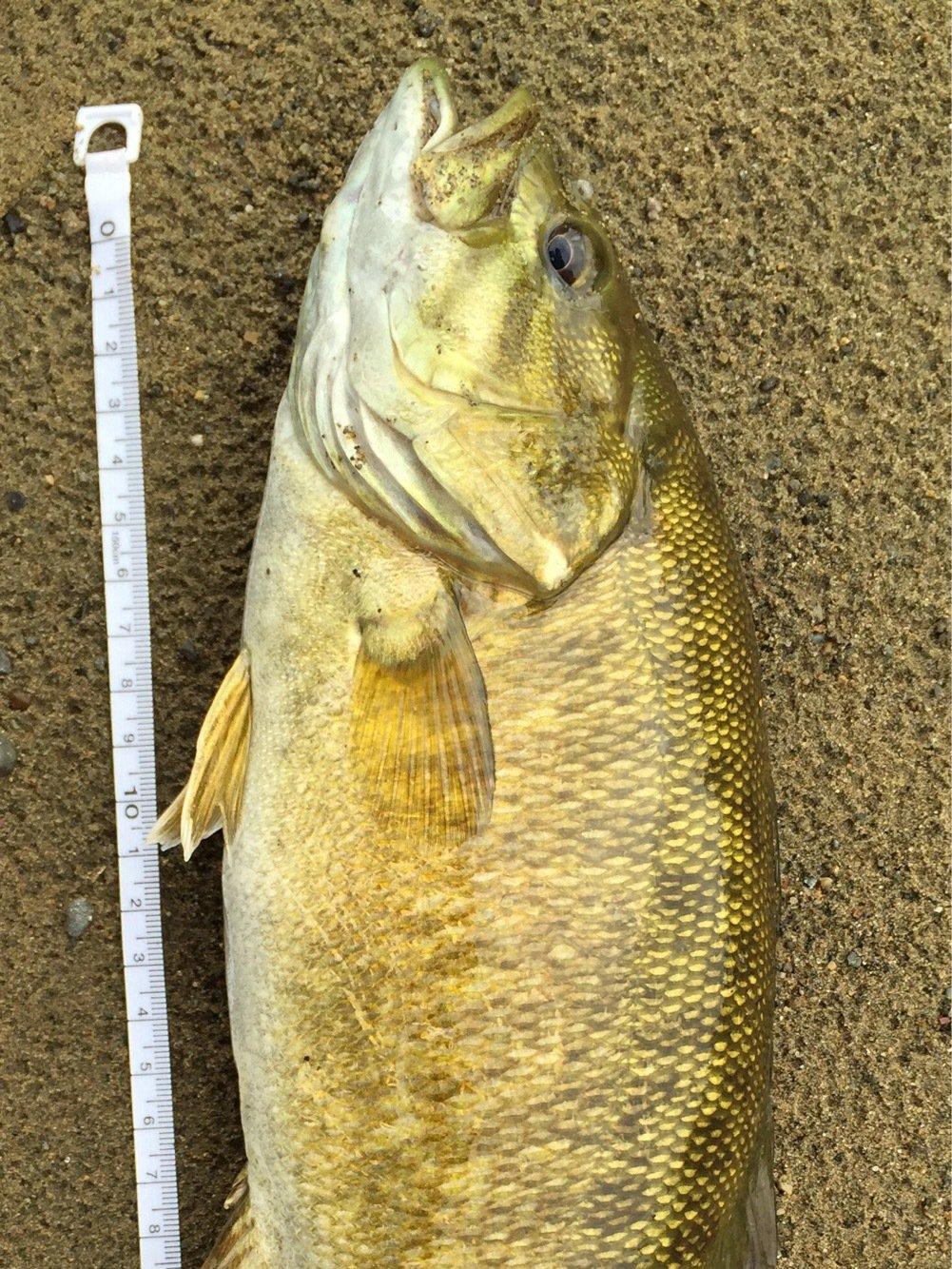 suuusmさんの投稿画像,写っている魚はスモールマウスバス
