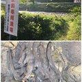 MitsuKenさんの岐阜県郡上市での釣果写真