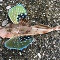 ajdmwさんの大分県佐伯市での釣果写真