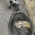 村松祐輔さんの静岡県富士市での釣果写真