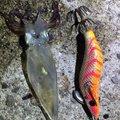 rin82さんの岡山県玉野市での釣果写真