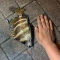 ヤスさんの岡山県玉野市での釣果写真