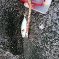 kikunさんの高知県土佐市での釣果写真