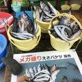 Minamisawaさんの北海道小樽市での釣果写真