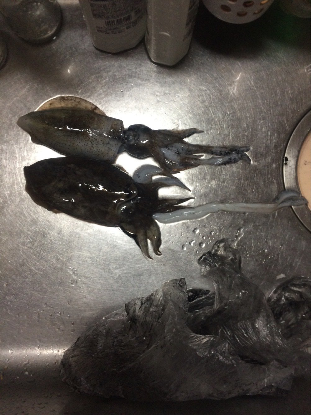 たくうまさんの投稿画像,写っている魚はアオリイカ