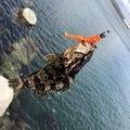 ヨシキさんの愛知県知多郡での釣果写真