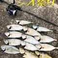 るーさんの三重県北牟婁郡での釣果写真