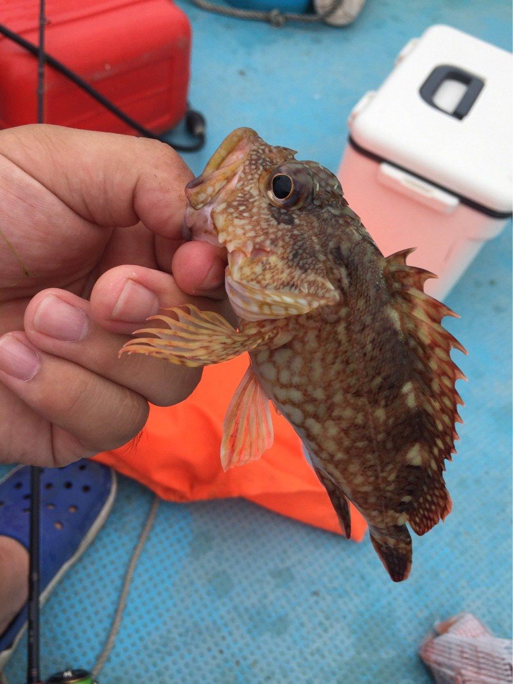 GGBB23さんの投稿画像,写っている魚はカサゴ