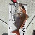 Hirotakaさんの広島県三原市での釣果写真