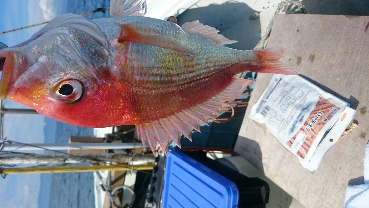ヒロシさんの投稿画像,写っている魚はシマゾイ