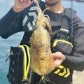 レイルスターさんの長崎県平戸市でのアオリイカの釣果写真