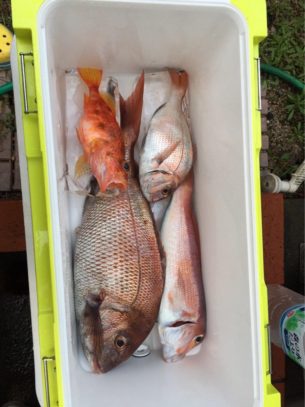 ヤマさんの投稿画像,写っている魚はマダイ