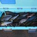 MWAMさんのヒラマサの釣果写真