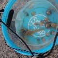 🐱招き猫🐱さんの福岡県糸島市での釣果写真