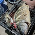 拓ニャンさんの福岡県中間市での釣果写真