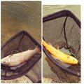 cool-0314さんのニジマスの釣果写真