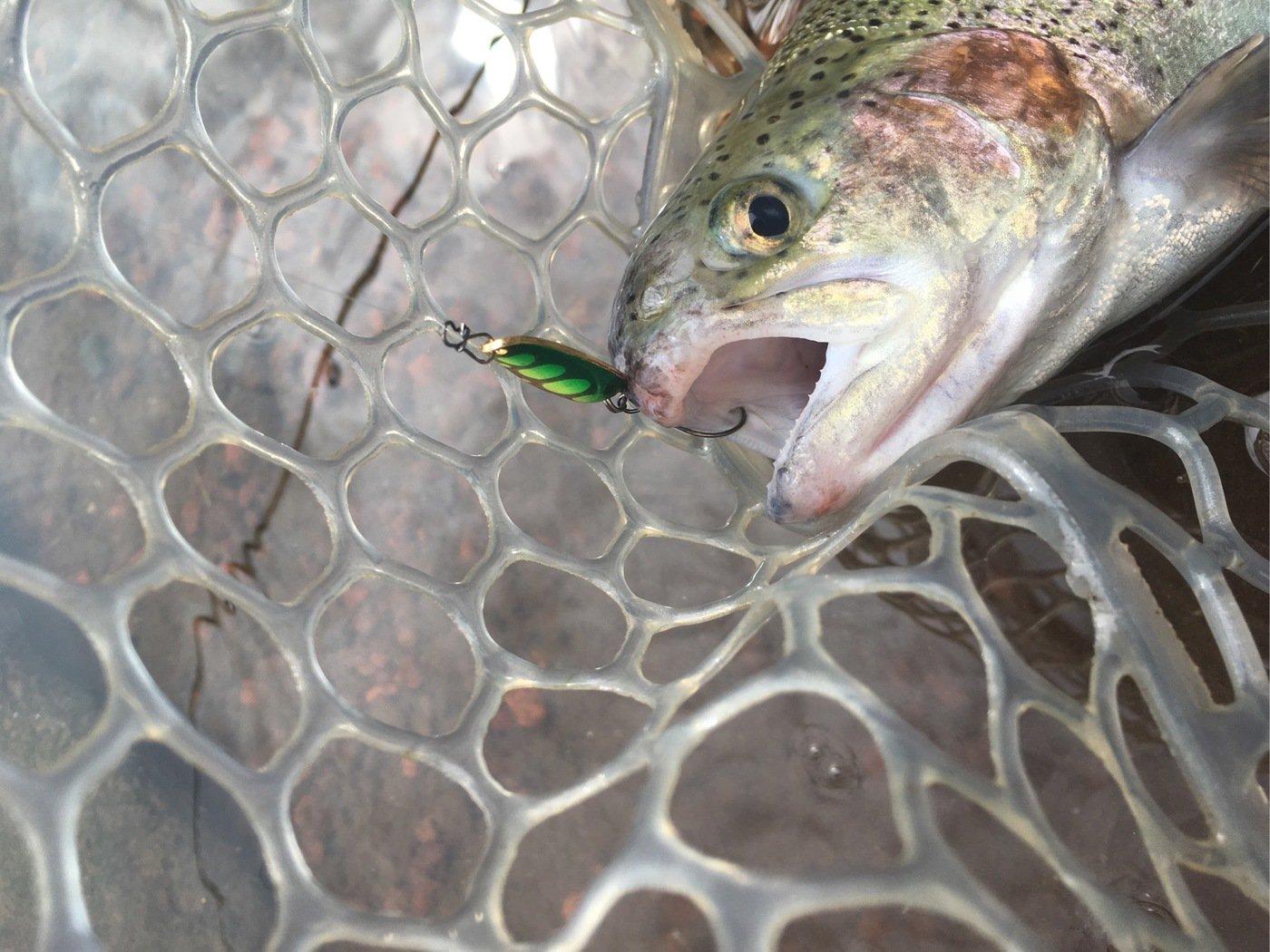 もっちさんの投稿画像,写っている魚はニジマス