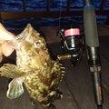 masaさんの愛知県碧南市での釣果写真