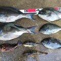 やっちゃんさんの山口県宇部市での釣果写真