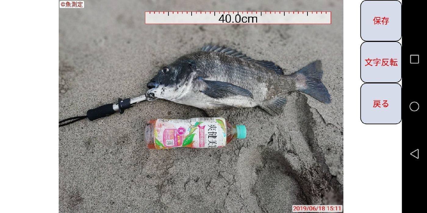 BOOOOZUさんの投稿画像,写っている魚はクロダイ