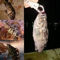フォーさんの愛知県知多郡での釣果写真