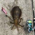 ヒデさんの大阪府泉南郡での釣果写真