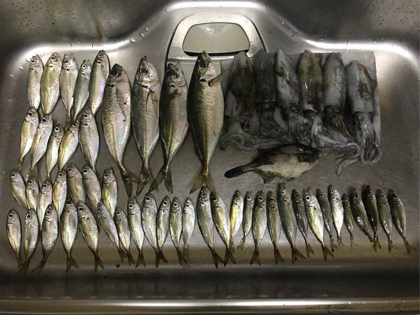 みちおさんの投稿画像,写っている魚は