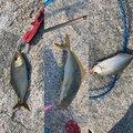 バルタンさんの茨城県鉾田市での釣果写真