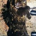 snufkin49さんの兵庫県でのタケノコメバルの釣果写真