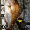 穴吹あきひろさんの香川県坂出市での釣果写真