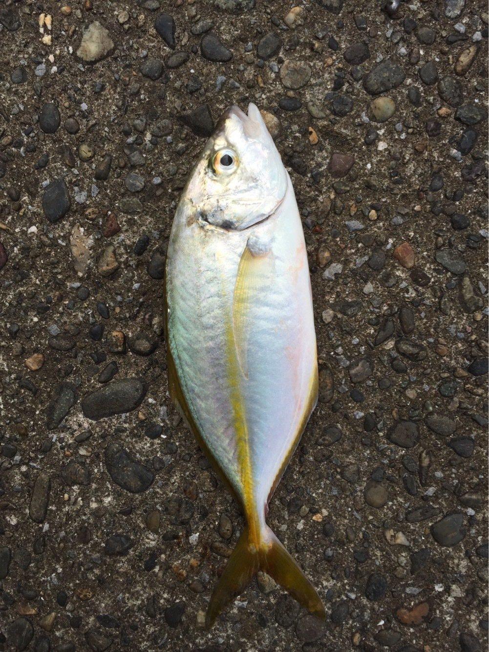 エスティマさんの投稿画像,写っている魚は