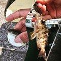 ハルはるさんの大分県臼杵市での釣果写真