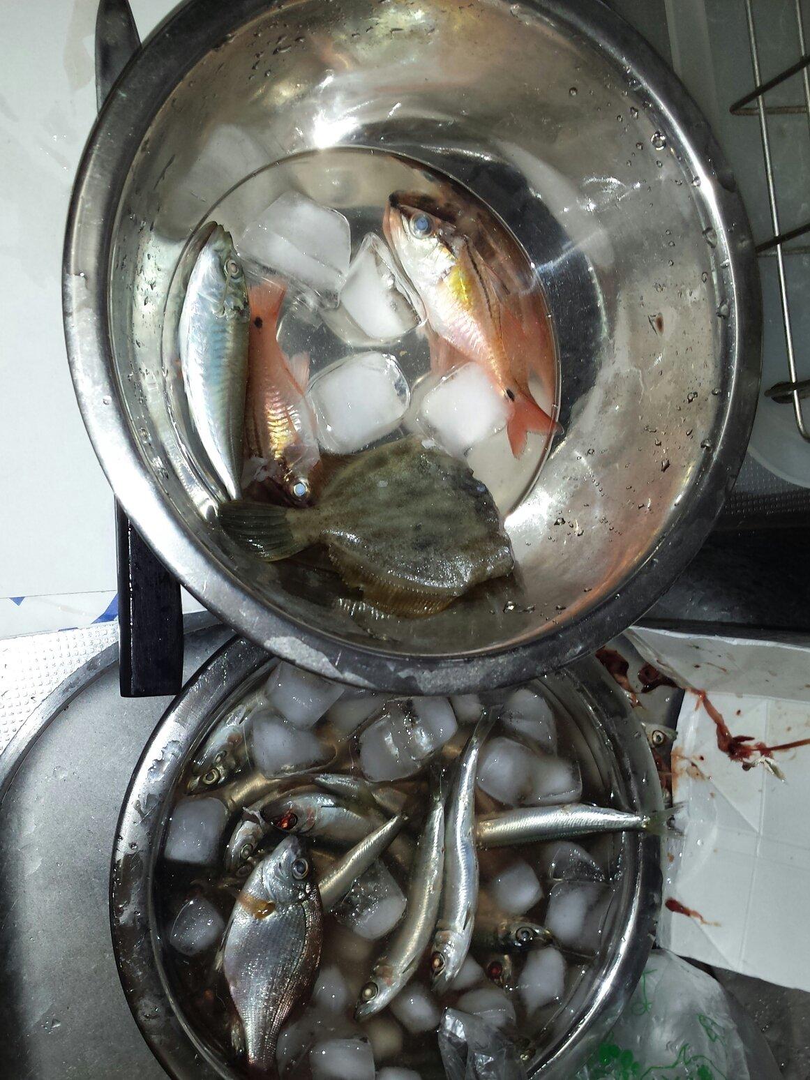 海智さんの投稿画像,写っている魚は