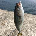 M.Kさんの長崎県西彼杵郡での釣果写真