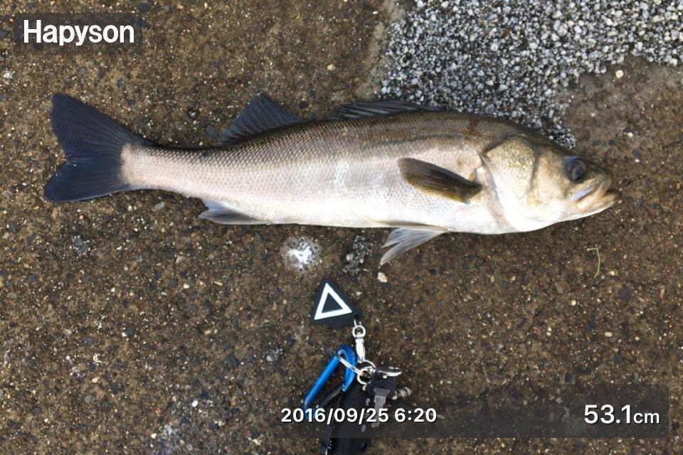 batayabataさんの投稿画像,写っている魚はスズキ
