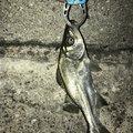yu-ki69さんの和歌山県田辺市での釣果写真