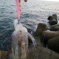 ちか@リュ~キ釣りCLUBさんの福岡県宗像市での釣果写真