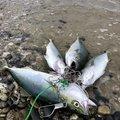 HIRO.Yさんの新潟県胎内市での釣果写真
