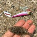 金魚さんの大分県臼杵市での釣果写真
