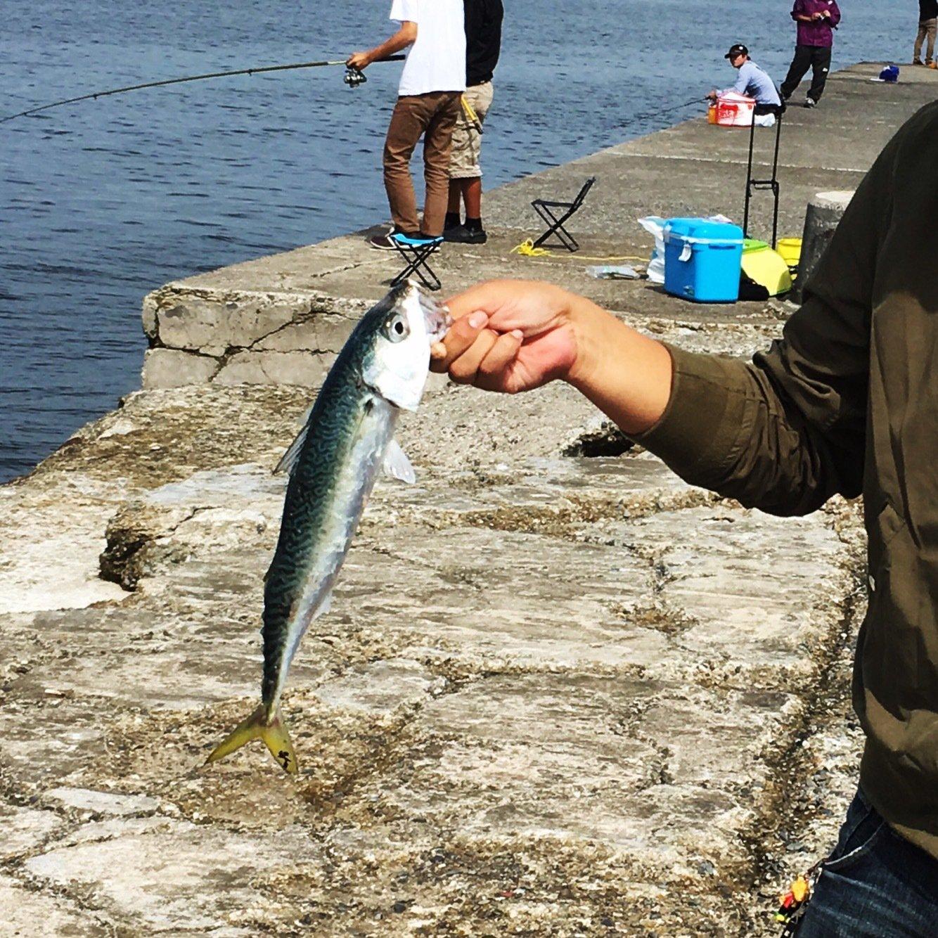mourenyassaさんの投稿画像,写っている魚はマサバ